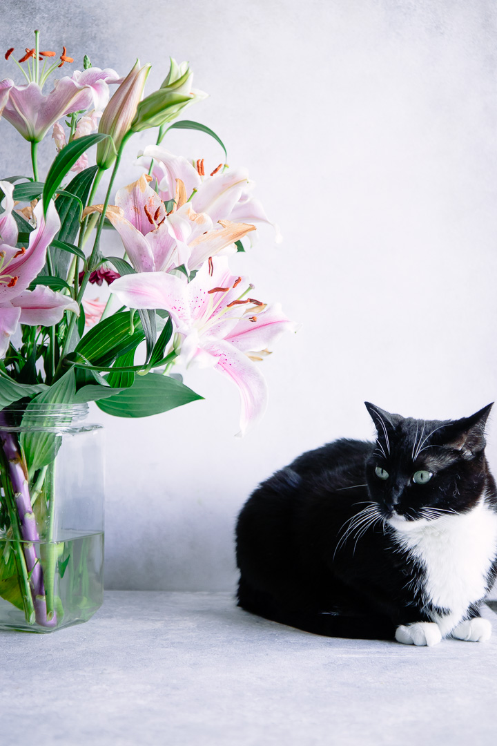 A cat on a table with a bouquet of pink flowers.