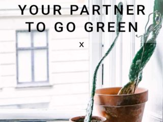 """two cacti in ceramic pots on a window sill with the words """"6 ways to motivate your partner to go green"""" in black writing"""
