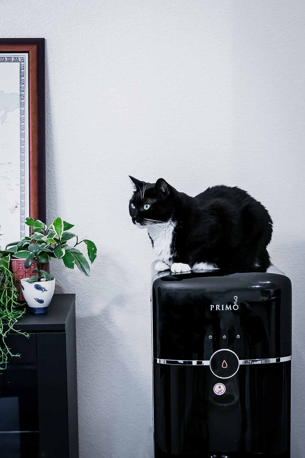 a black cat sitting atop a primo in-home water dispenser